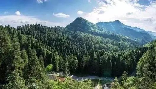 国家林草局通报12起破坏森林资源典型案件缩略图