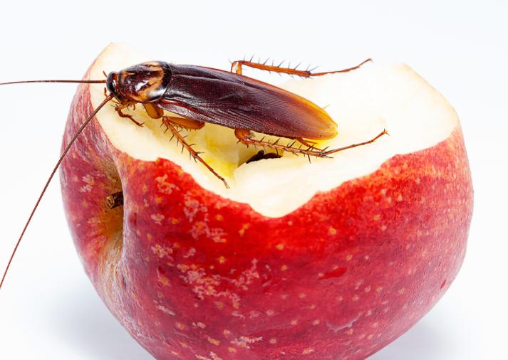"""水果腐烂蟑螂爬,奶茶""""顶流""""的卫生为何如此不堪缩略图"""